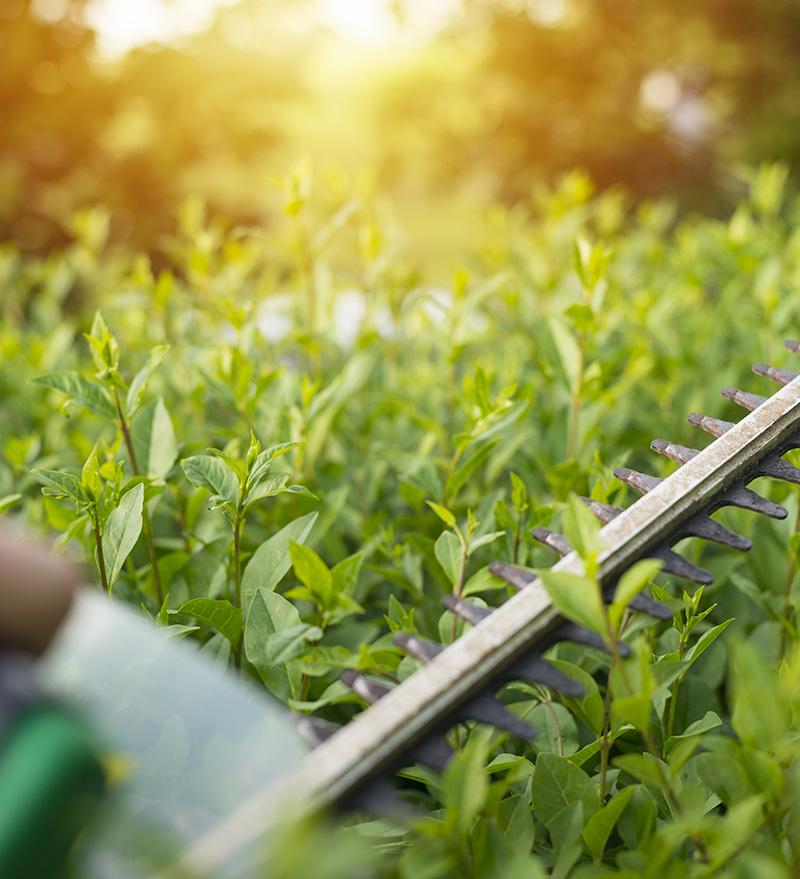 pielęgnacja zieleni ogrodów